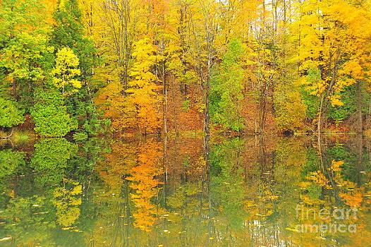 Terri Gostola - Autumn Kaleidoscope 12