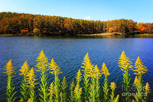 Beverly Claire Kaiya - Autumn Lake with Canada Goldenrod