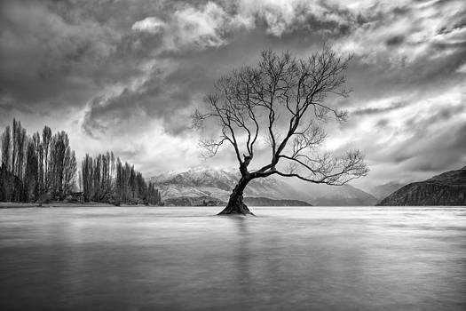 Autumn Lament by Brad Grove
