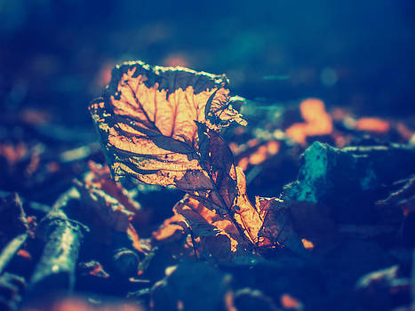 Autumn Leaf 2 by Patrick Horgan