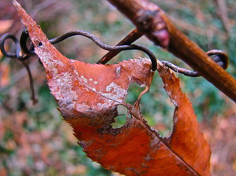 Sandy Tolman - Autumn Leaf and Vine 2995