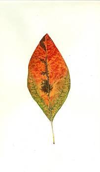 Autumn Leaf by Barbara Lightner