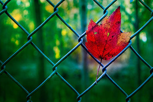 Elvira Pinkhas - Autumn Leaf