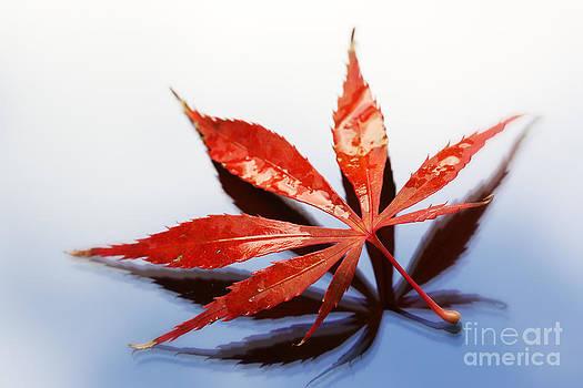 LHJB Photography - Autumn leaf