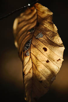 Autumn Leaf by Ian Wilson