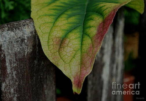 Autumn leaf by Marija Djedovic