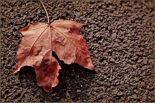 Autumn leaf by Nadeesha Jayamanne