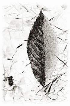 Autumn Leaf by Valentina Bunic