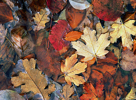 Autumn Leafs Background by Efim Chernov