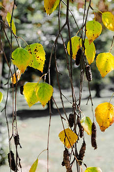 Autumn leafs. by Slavica Koceva