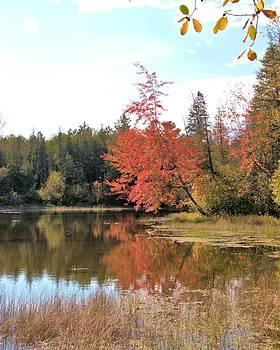 Valerie Kirkwood - Autumn Leaning Tree