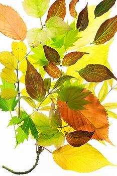 Autumn leaves by Alena Bytcankova