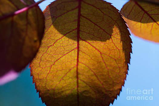 Alexander Butler - Autumn Leaves