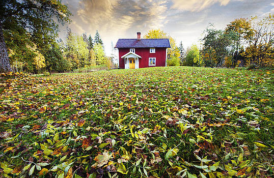 Autumn Leaves And Colors In Old Rural Nature by Christian Lagereek