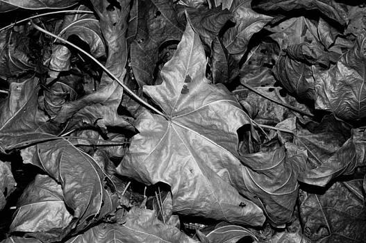 Autumn Leaves by Art Shimamura
