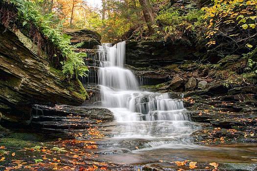 Gene Walls - Autumn Leaves Below the Nameless Hidden Waterfall