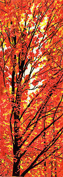Autumn Leaves by Cate McCauley