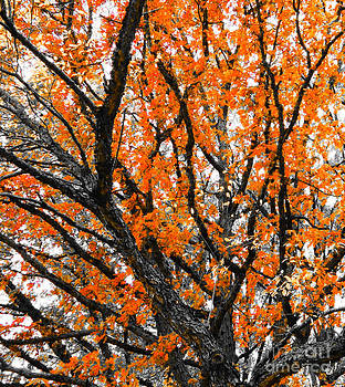 Autumn Leaves by Catherine Hill