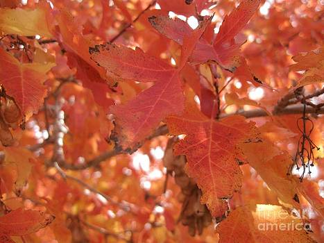 Autumn Leaves by Crissy Boss