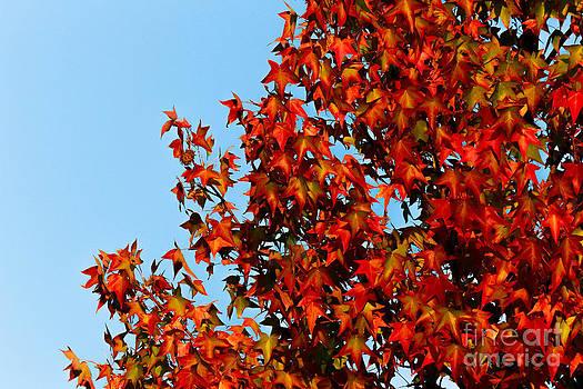 DJ Laughlin - Autumn Leaves