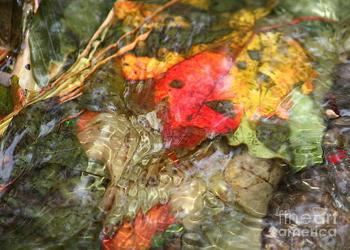 Danielle Groenen - Autumn Leaves in Pond