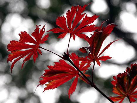 Autumn Leaves by JianGang Wang