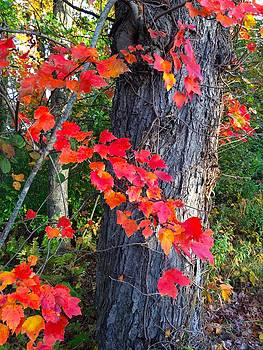 Autumn Leaves by Jim Gillen