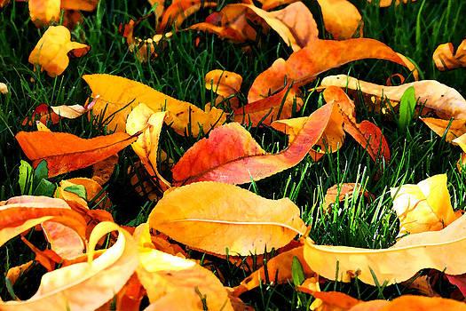 Veronica Vandenburg - Autumn Leaves