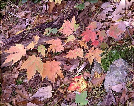 Autumn Leaves by Joyce Blank