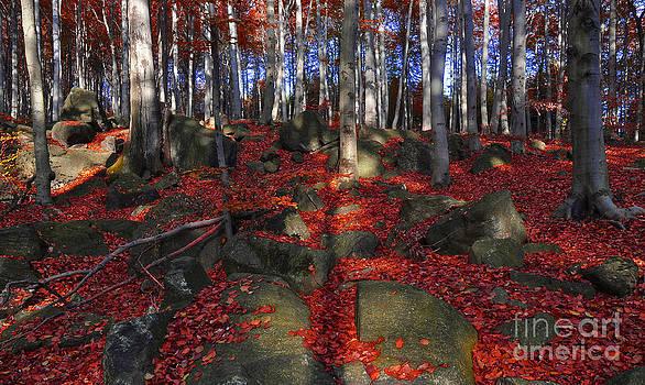 Autumn leaves by Lilianna Sokolowska