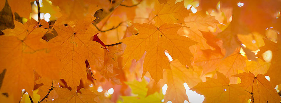 Autumn Leaves by Michael Donahue