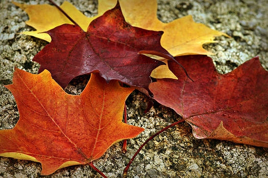 Nikolyn McDonald - Autumn Leaves