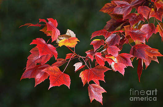 Autumn Leaves by Rodney Campbell