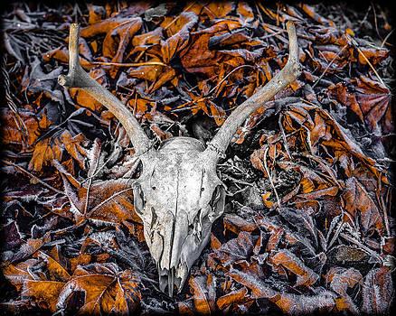 Ronda Broatch - Autumn Leaves