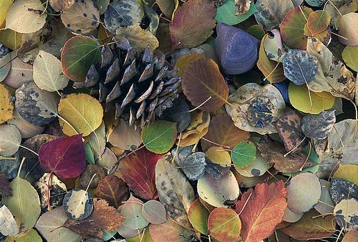 Scott Wheeler - Autumn Leaves