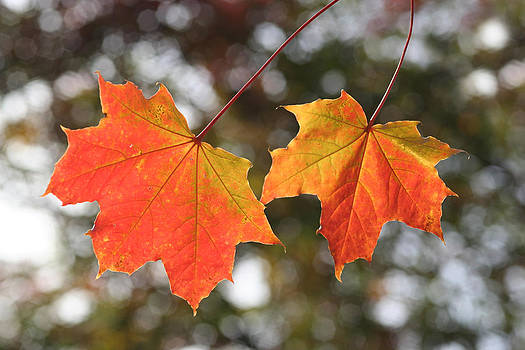 Dreamland Media - Autumn Leaves