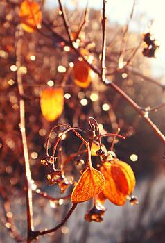 Autumn leaves  by Victoria  Kostova