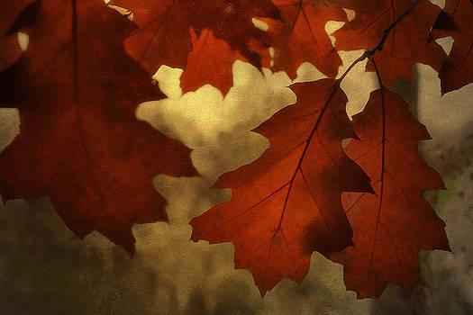 Autumn Light by Jackie Schuknecht