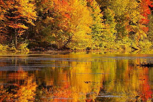 Autumn by Lindy Whiton