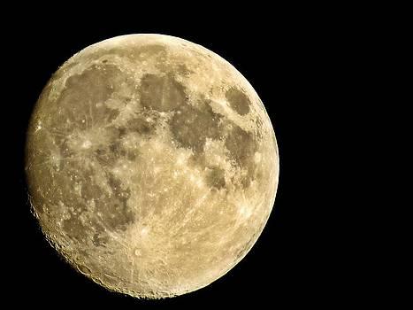 Rick Todaro - Autumn Luna