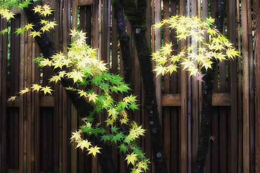 Autumn Maple Sapling by Thomas Chamberlin