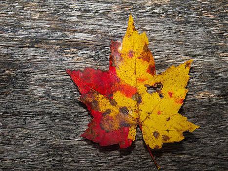Autumn on wood by Robert Gaughan