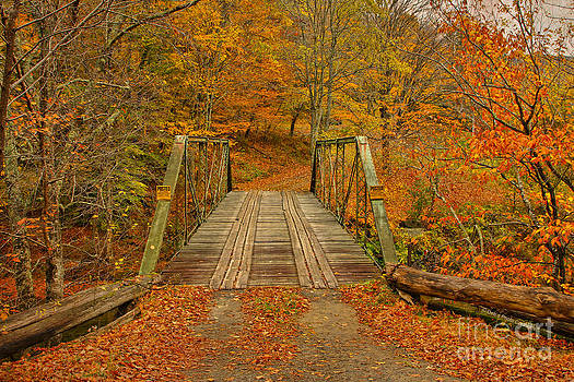 Deborah Benoit - Autumn Orange Colors