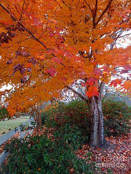 Autumn Orange  by Lisa Jones