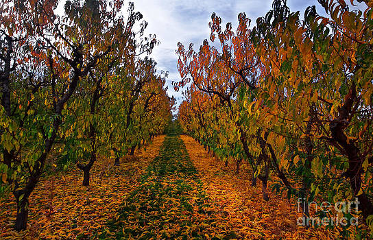 Autumn Orchard by Marcus Angeline