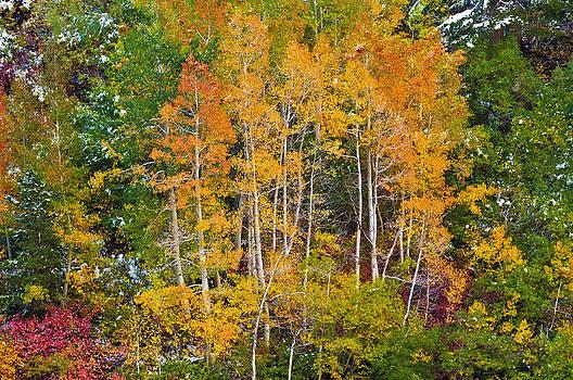 Autumn Palette by Russ Bishop