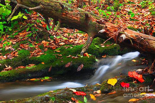 Autumn Paths by Everett Houser