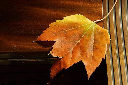 Mick Anderson - Autumn Piano 15