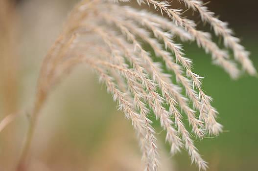 Harold E McCray - Autumn plants