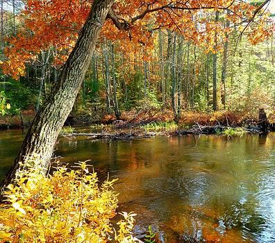 Autumn Pond by Elaine Franklin